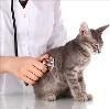 Ветеринарные клиники в Кеми